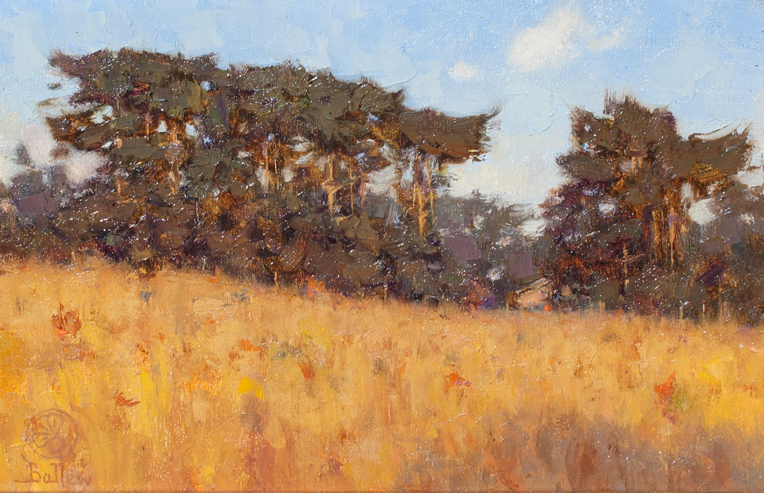 hillside_cypress_california_david_ballew